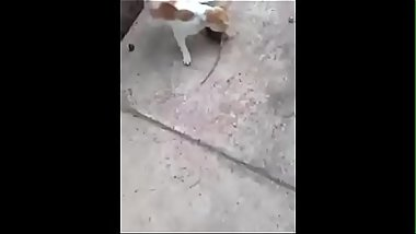 Little Kitty Gets FUCKED by Small Rat